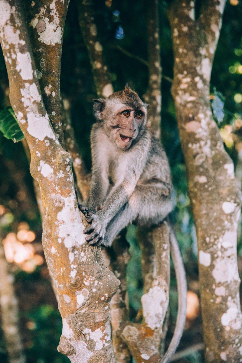 A Baby Monkey Sits On Branches And Smiles