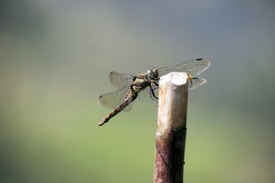 A Close Up Of A Dragonfly Taking A Rest