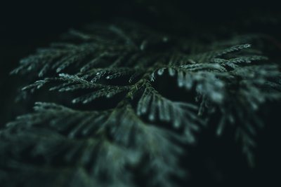 A Detailed Fern Leaf In The Dark