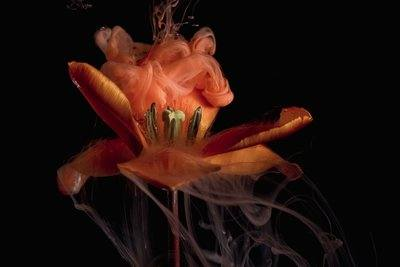 A Flower Begins To Seethe Red And Orange Plumes