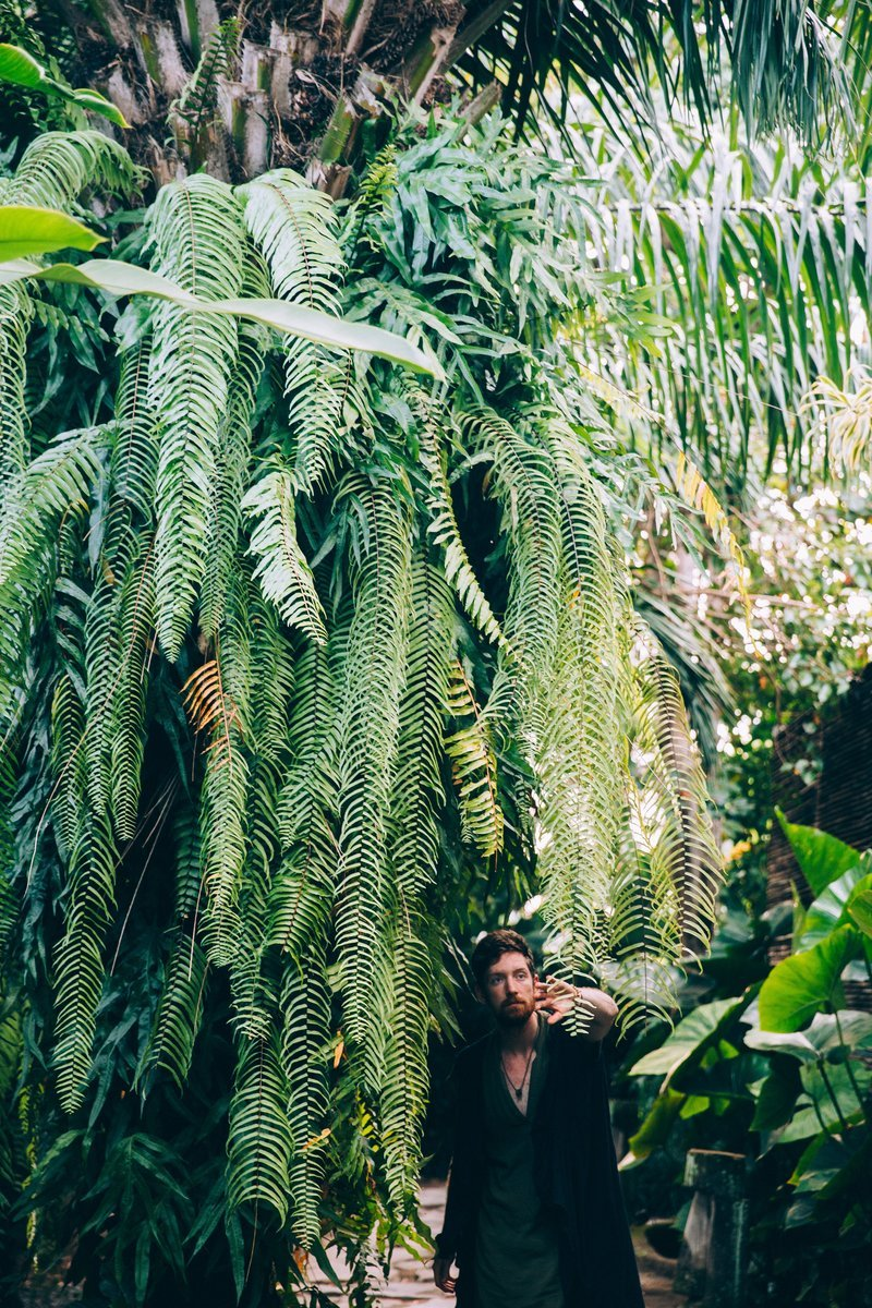 A Man Brushes Ferns Out Of His Path In A Botanical Space