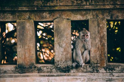 A Monkey On A Stone Wall Amongst The Trees