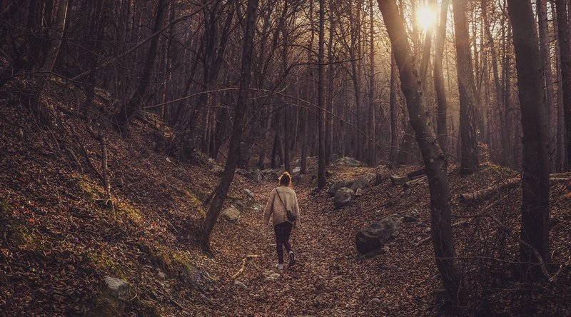 A Woman Walking Through A Forest in the Afternoon