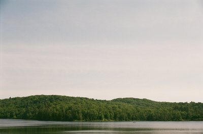 A Wooded Horizon Separate Water And Sky