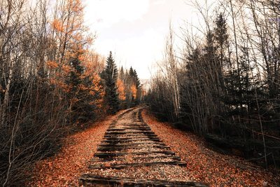 Abandoned Train Track Through The Woods