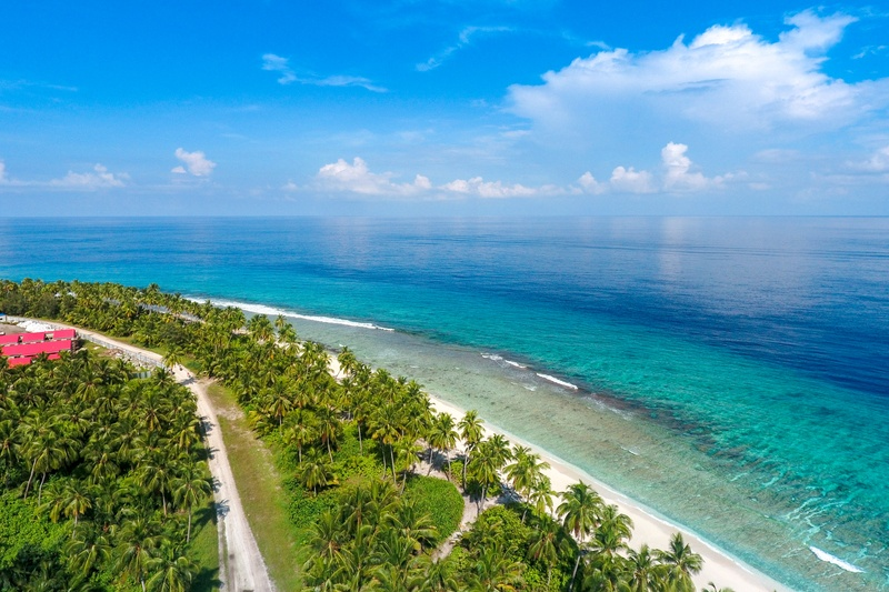 Aerial View of Coconut Trees By the Beach