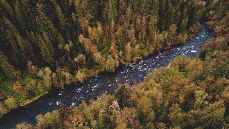 Aerial of River and Forest