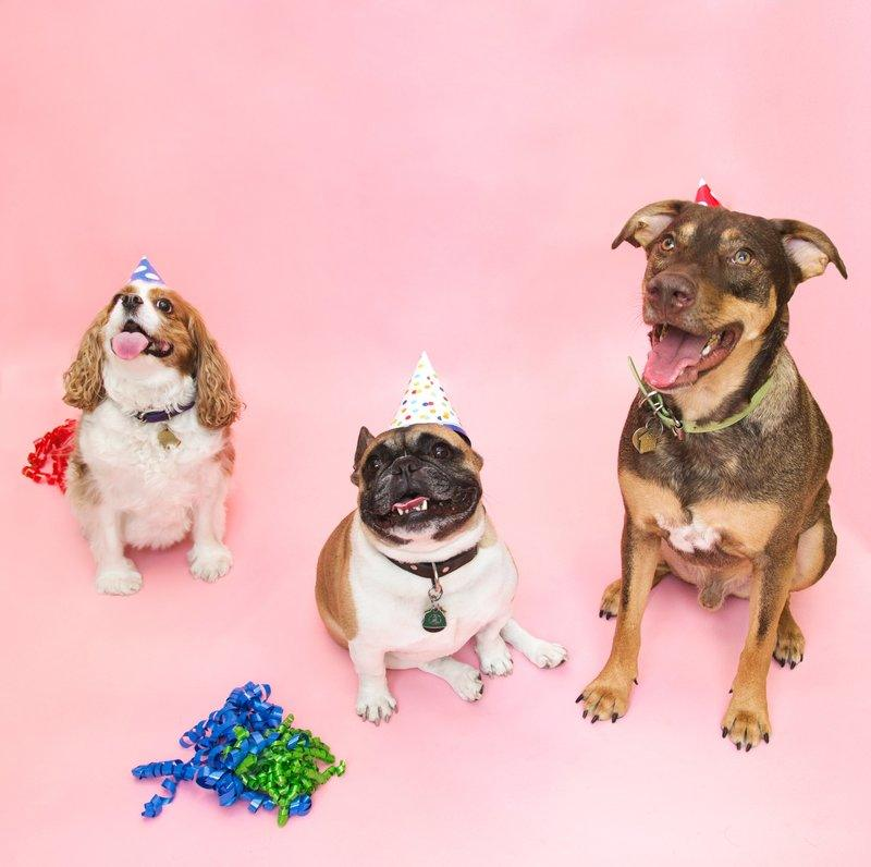 All Dogs Go To Birthday