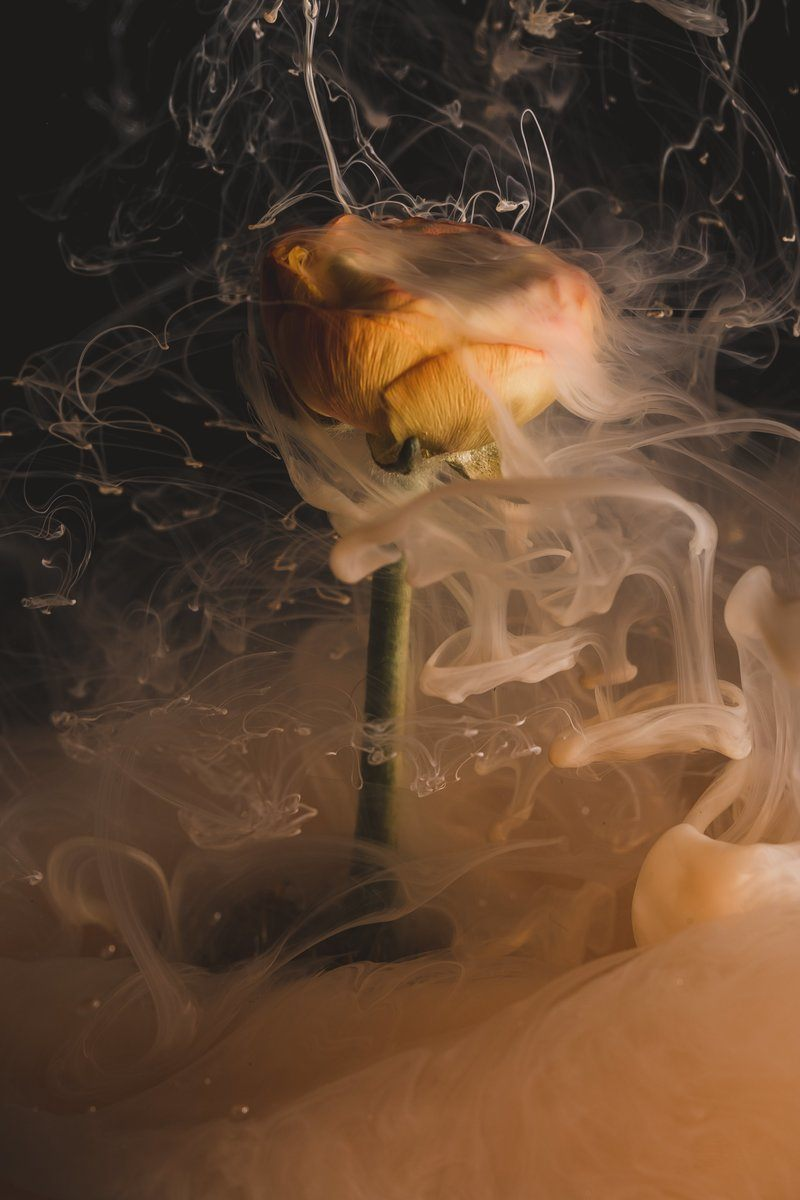 An Orange Flower Smokes As If On Fire