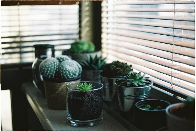 Assorted Succulents Photo