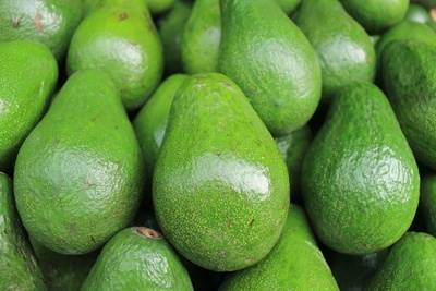Avocado Fruits Photo