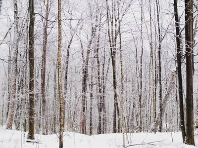 Bare Trees And Field Covred with Snow