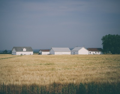 Barn Houses Surrounded with Wheat Field Under Grey Sky