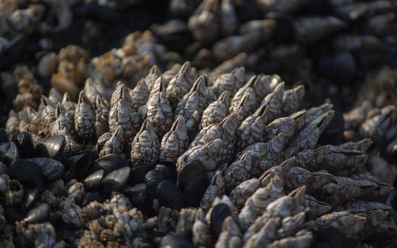 Bed Of Mussels