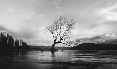 Black & White  Bare Tree on Calm Water