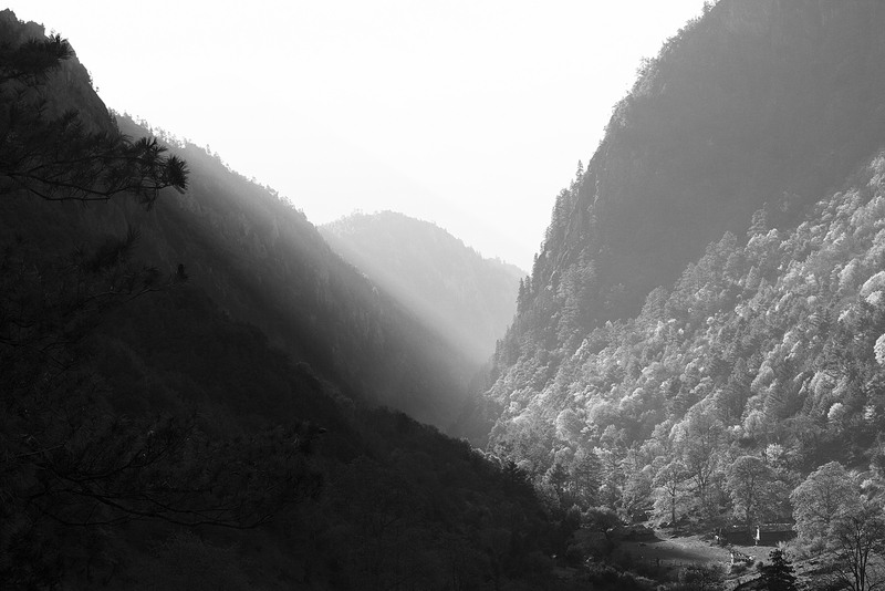 Black & White Photography of Mountain Covered with Trees