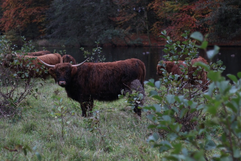 Brown Bison Near Body Water