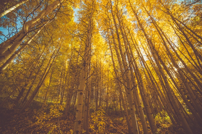Brown Forest Trees