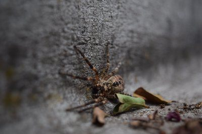Brown Spider On Wall