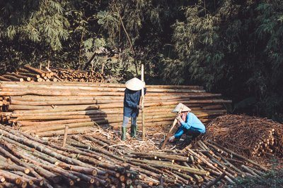 Chinese Lumber Workers