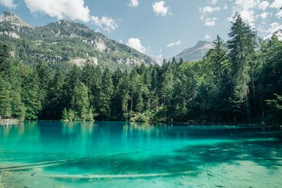 Clear Lake, Wald & Berge