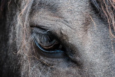 Close-Up  Gray Horse's Eye