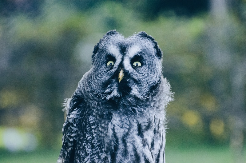 Close-Up Photography of Black And Grey Owl