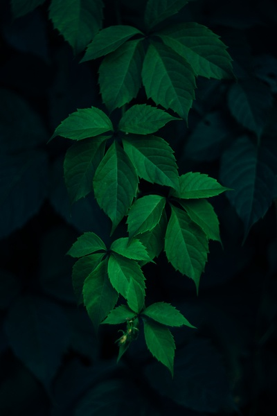 Closeup  Green Leafed Plant
