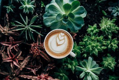 Coffee In Plants