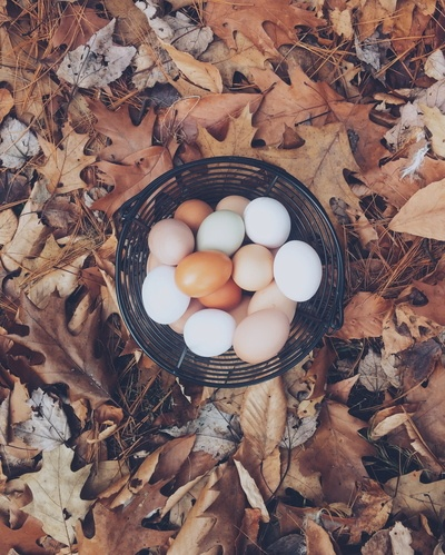Collection of White And Brown Eggs