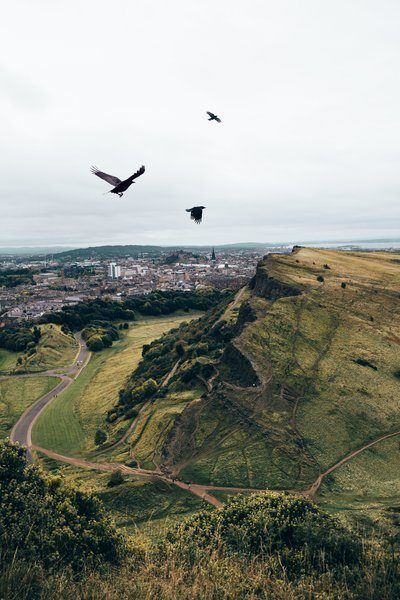 Crows Fly Over Hills