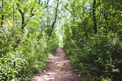 Dirt Path In Trees