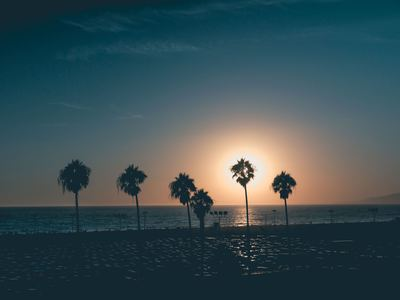 Dusty Sky With Palm Sihouettes On Beach At Sunset
