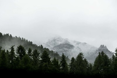 Evergreen Trees on Slope of Snowy Mountain
