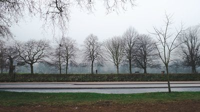 Parc Foggy London