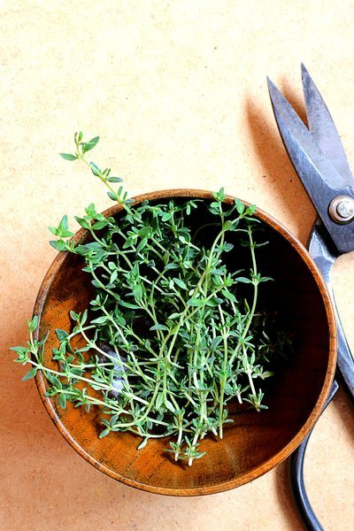 Fresh Thyme And Kitchen Scissors