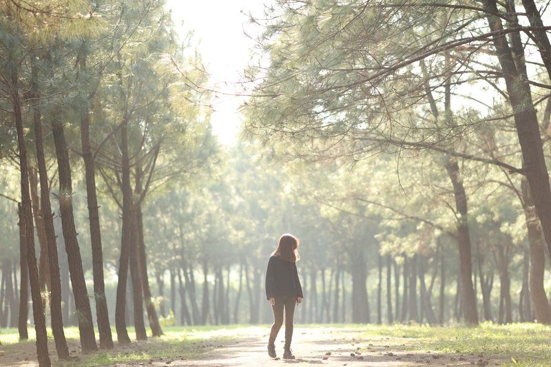 Girl Walks Through Sun Drenched Grove Filled With Pine Trees