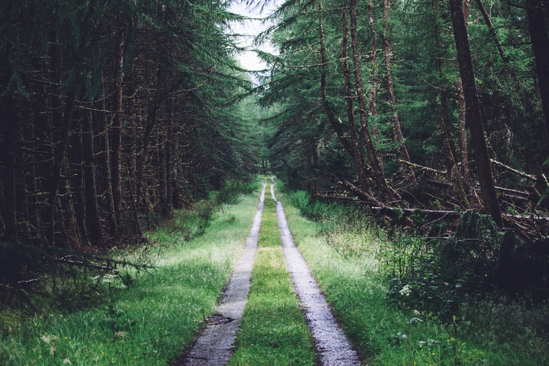 Grass Road Between Tree Forest
