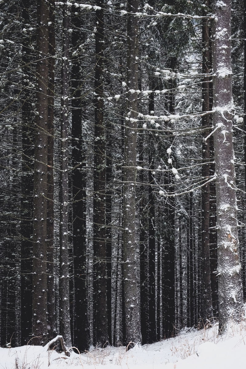 Gray And Black Trees During Winter