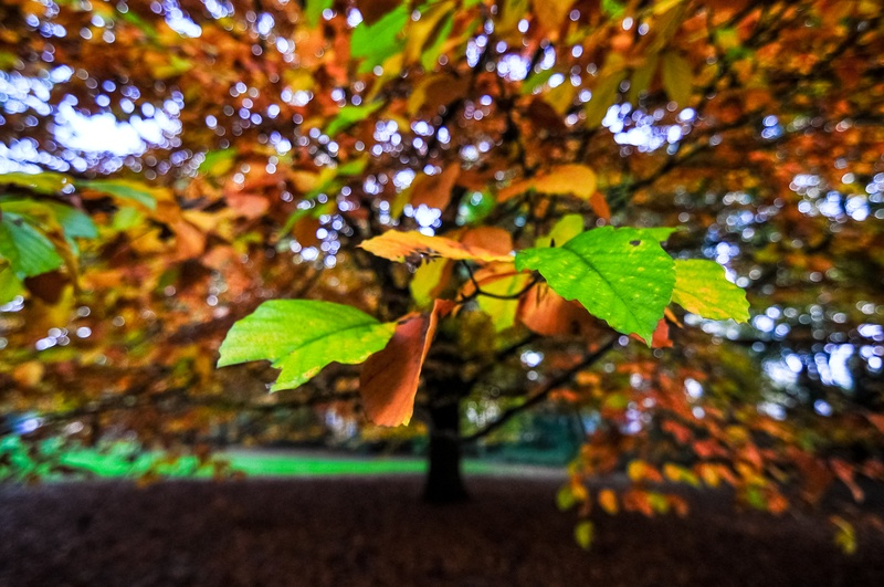 Green And Brown Tree