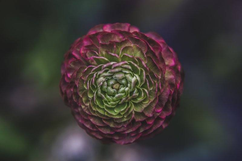 Green And Pink Flower