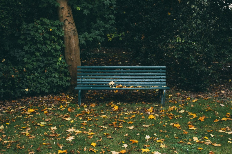 Green Wooden Bench And Autumn Leaves on Grass Covered Field Near