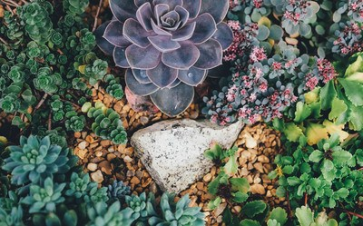 Grey Stone Surrounded with Succulent Plants