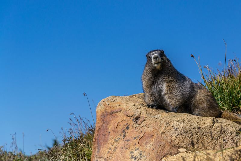 Groundhog Poses