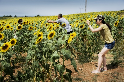 Group of People Taking of Sunflower