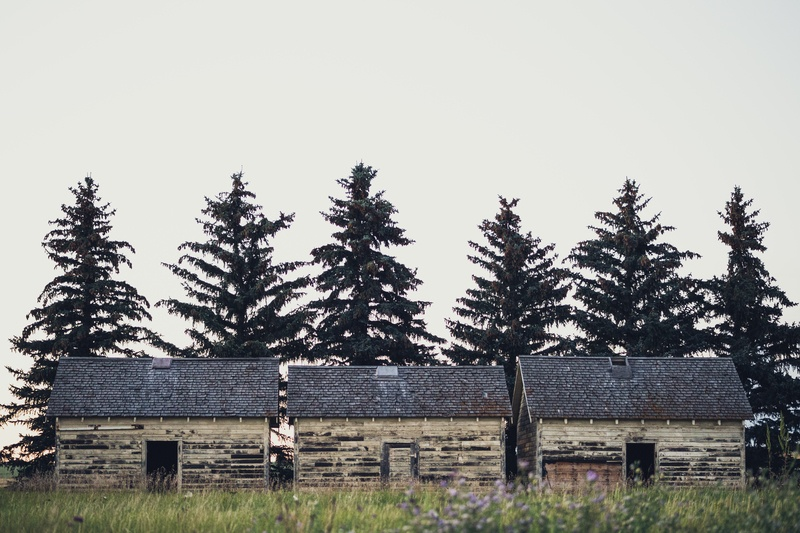 Landscape  Houses in Front of Pine Trees