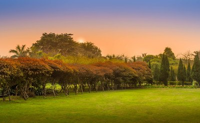 Landscape Photography of Brown Trees