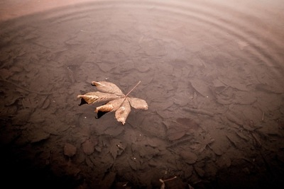 Leaf With Water Ripple