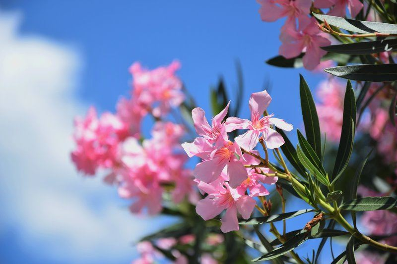 Light Pink Blooming Flowers