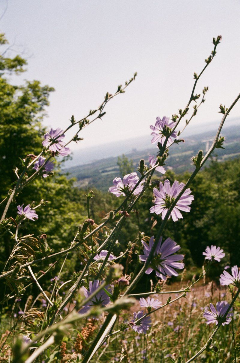 Lilac Flowers Take In The View